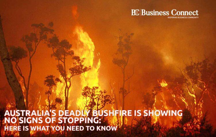 Australian bushfires   Business Connect