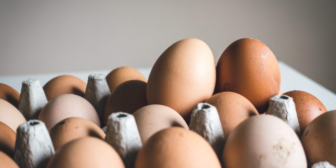 Egg   Winter food