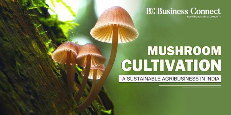 MUSHROOM CULTIVATIONA SUSTAINABLE AGRIBUSINESS IN INDIA.