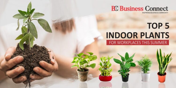 Top 5 Indoor Plants for Workplaces this Summer