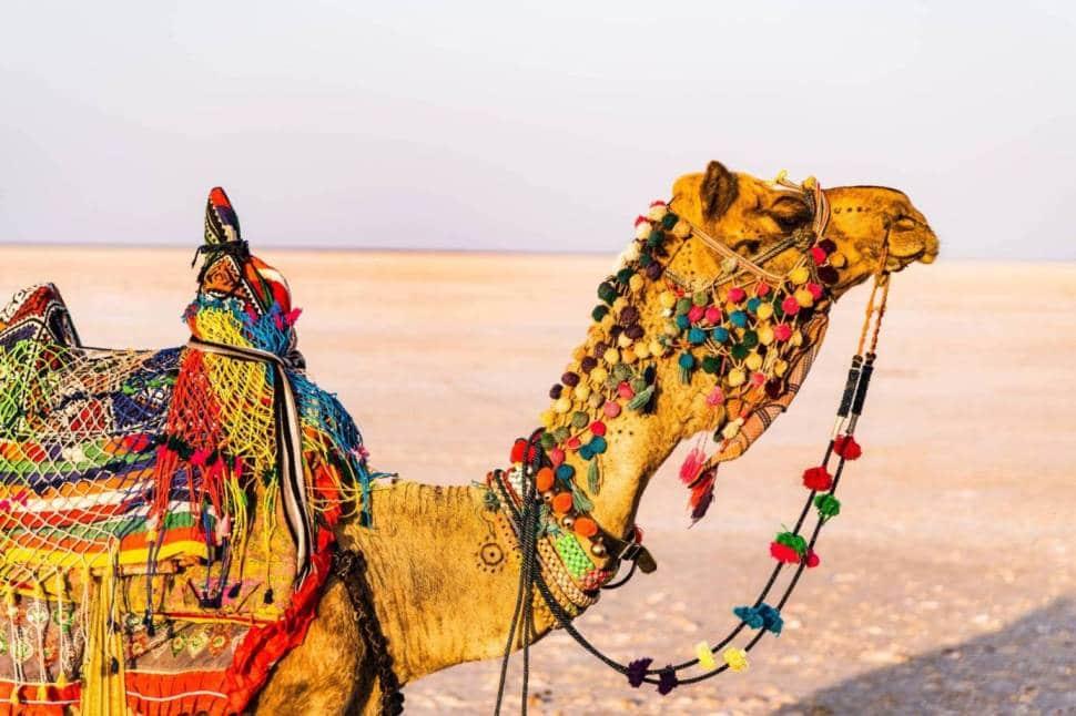 Ahmedabad to Kutch Road Trip   Top 10 Best Road Trip in India